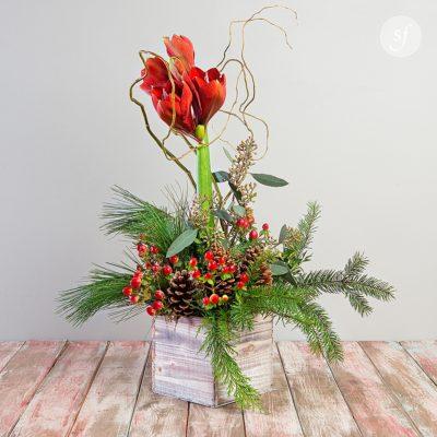 Amaryllis in festive winter arrangement designed by Steve's Floral in Manhattan, KS.