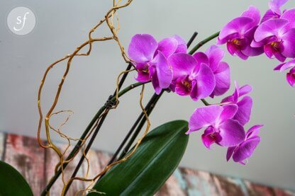 A purple orchid spires above a low, modern black vase.