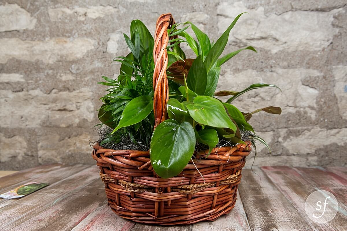 Dish garden basket best sellers plants greenery for Green plants for garden